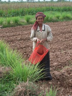 A Khmer woman in the fields; she is one of 1.2 million Khmer people who make up an ethnic minority group in Thailand. Source: Wikimedia Commons